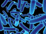 can augmentin be used for h pylori